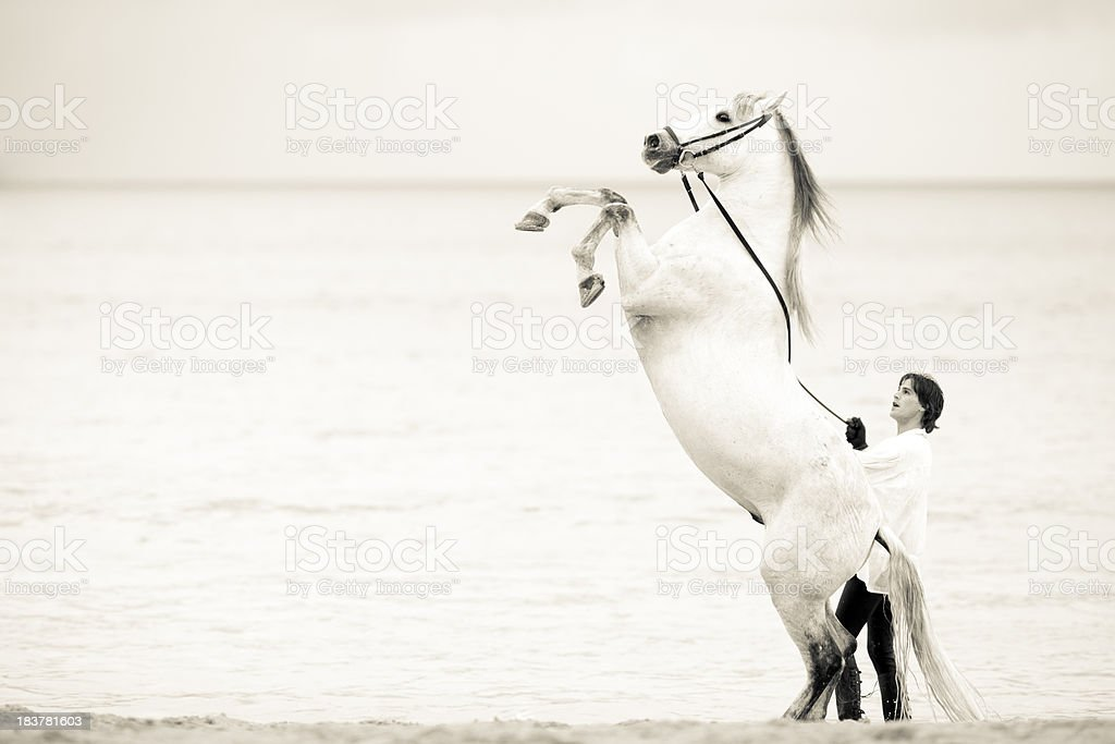 white stallion stock photo