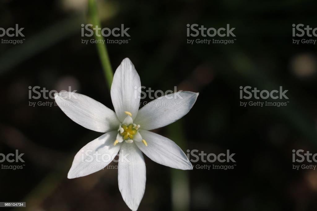 white star zbiór zdjęć royalty-free