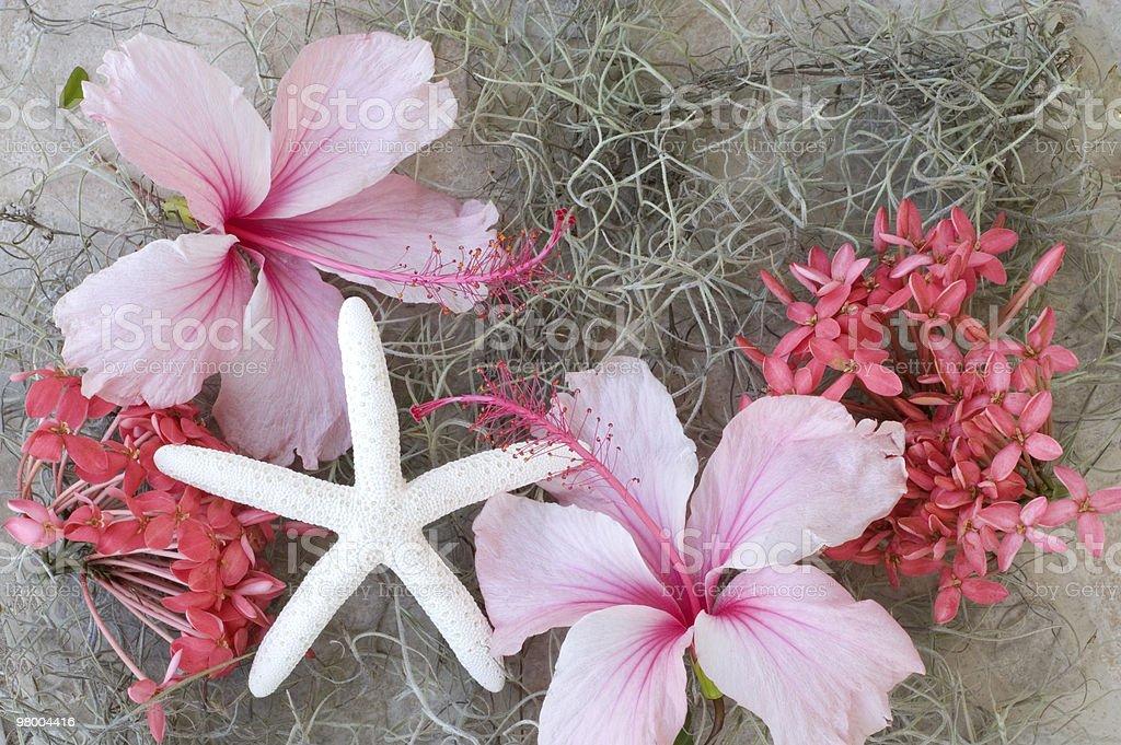 White Starfish and Pink Hibiscus royalty-free stock photo