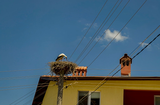 White stork and nest in Belchin village