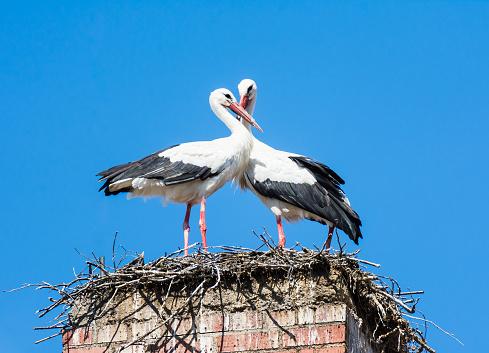White Stork Couple In Their Nest On A Chimney - zdjęcia stockowe i więcej obrazów Biały