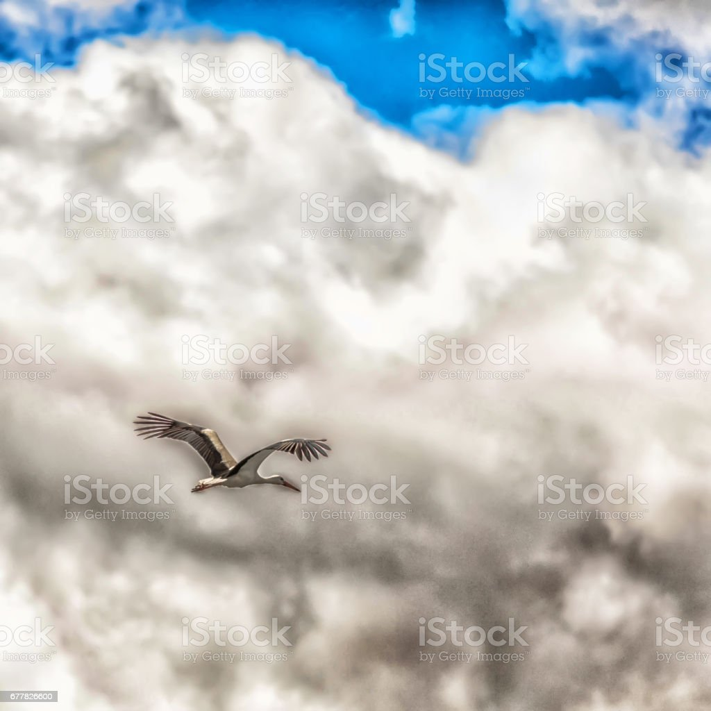 White stork royalty-free stock photo