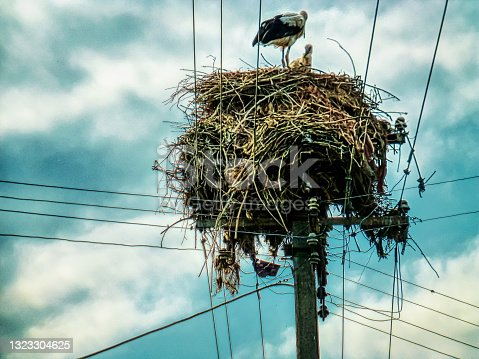 istock White Stork Standing on a Nest Made of Branches. 1323304625