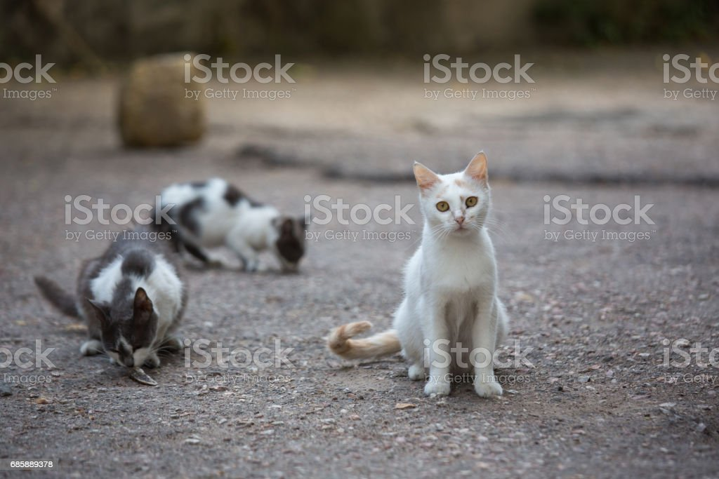 Blanco gato callejero en las calles de la ciudad - foto de stock