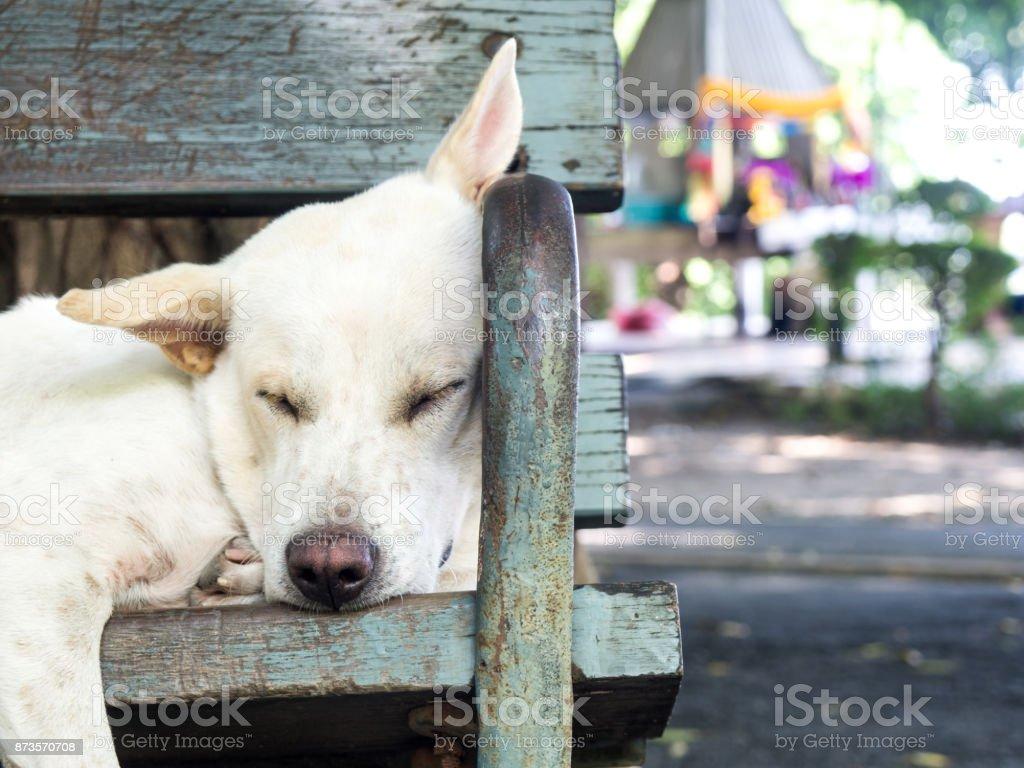 Weiße Streunender Hund Auf Einem Stuhl In Einem Garten Liegen