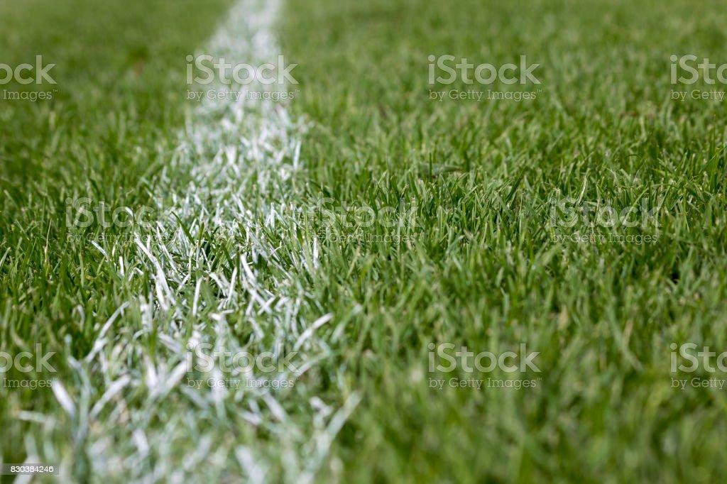 White stripe marking on green grass – zdjęcie