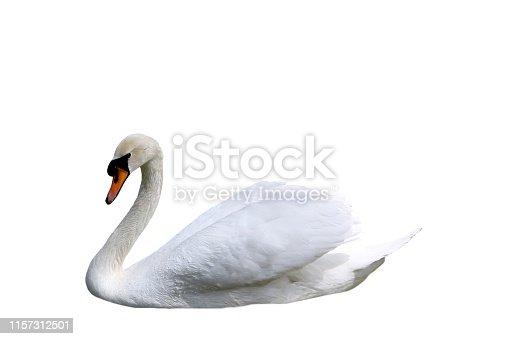 istock White swan on white background 1157312501