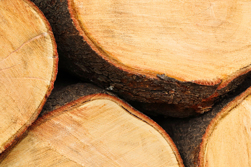 istock White Syringe Tree Wood Stack Close-up (Kirkia acuminata) 1250557271