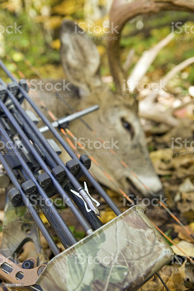White Tail Deer Buck Killed with Bow and Arrow stock photo