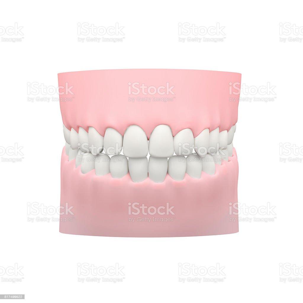 Blanco De Los Dientes Modelo Modelo Dental Stock Foto e Imagen de ...
