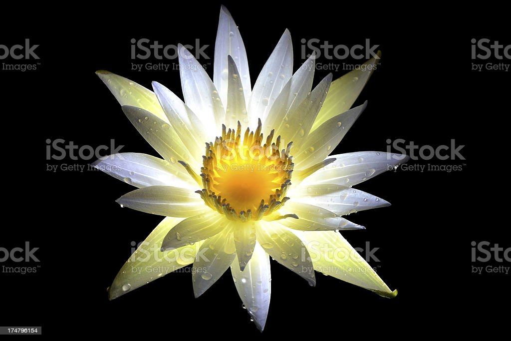 White Thai Lotus with drop of Water, Thailand royalty-free stock photo