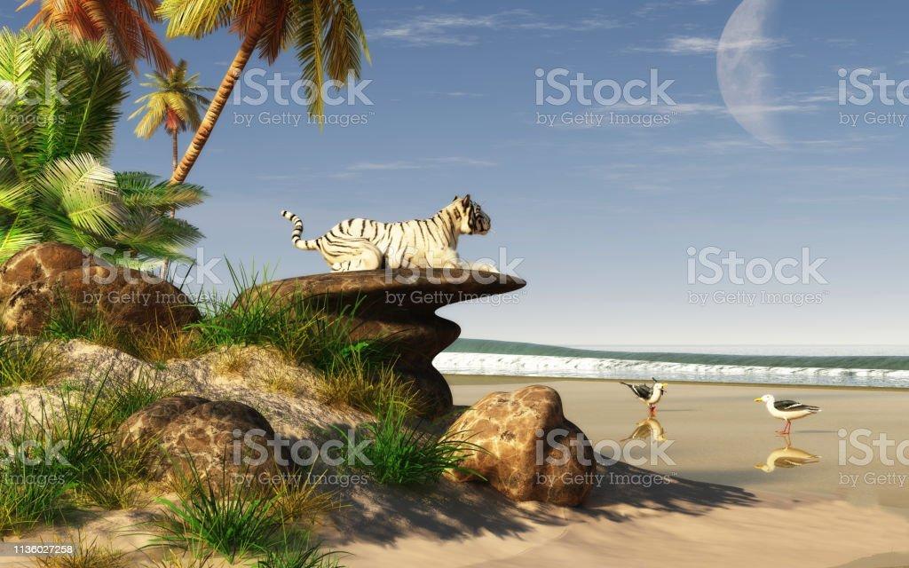 White Tiger on a Beach stock photo
