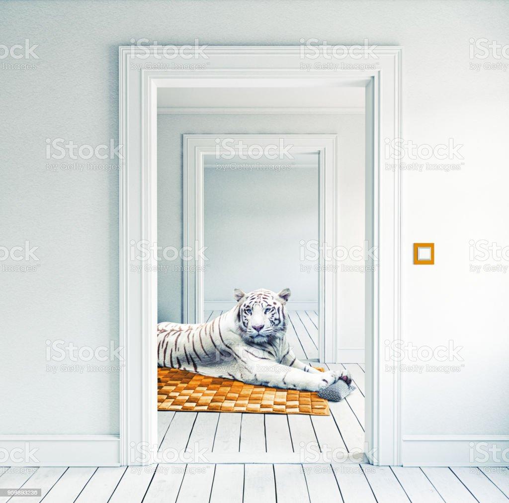 white tiger on the orange carpet stock photo