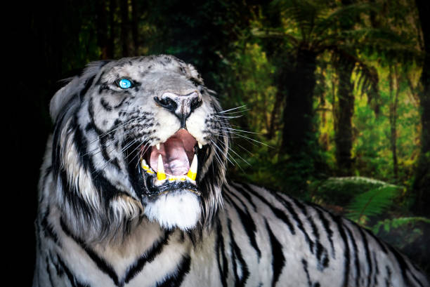 Best White Tiger Stock Photos, Pictures & Royalty-Free