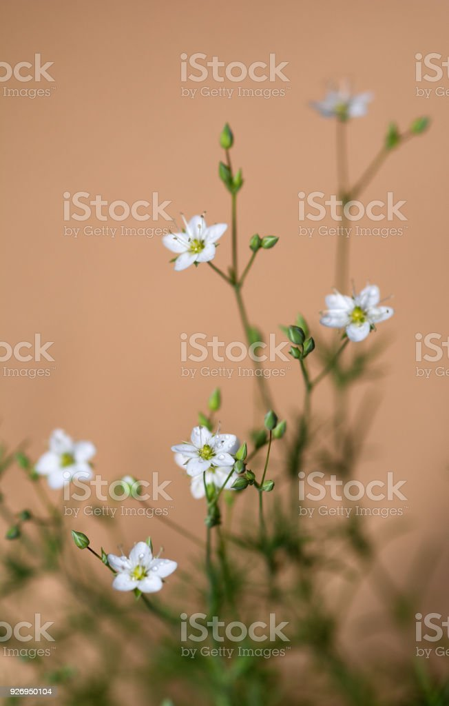 White tiny flowers stock photo more pictures of backgrounds istock white tiny flowers royalty free stock photo mightylinksfo