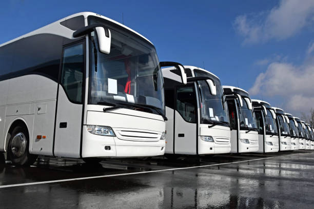 White tourist buses in a row stock photo
