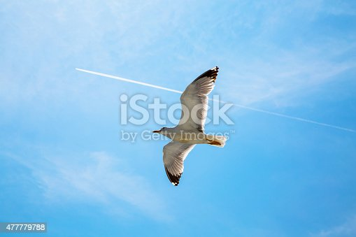 istock White trace of plane and seagull flying one direction 477779788