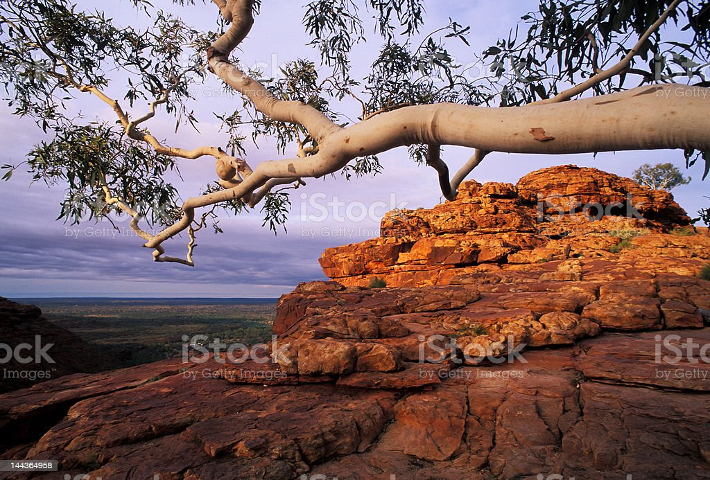 white tree and red rock royalty-free stock photo