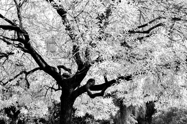 Árbol de blanco - foto de stock