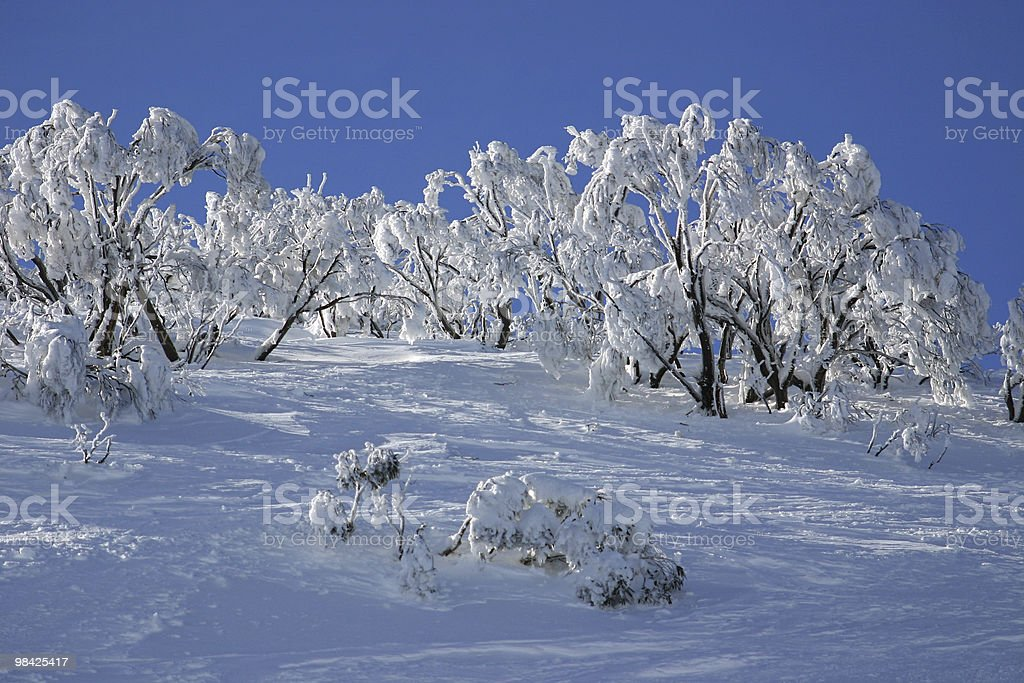 White Trees in the Snow royalty-free stock photo