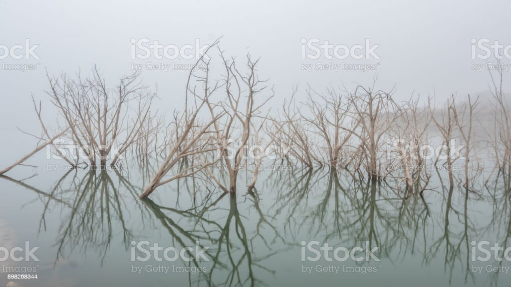 White Trees Reflected on Lake in a Dense Fog Day stock photo