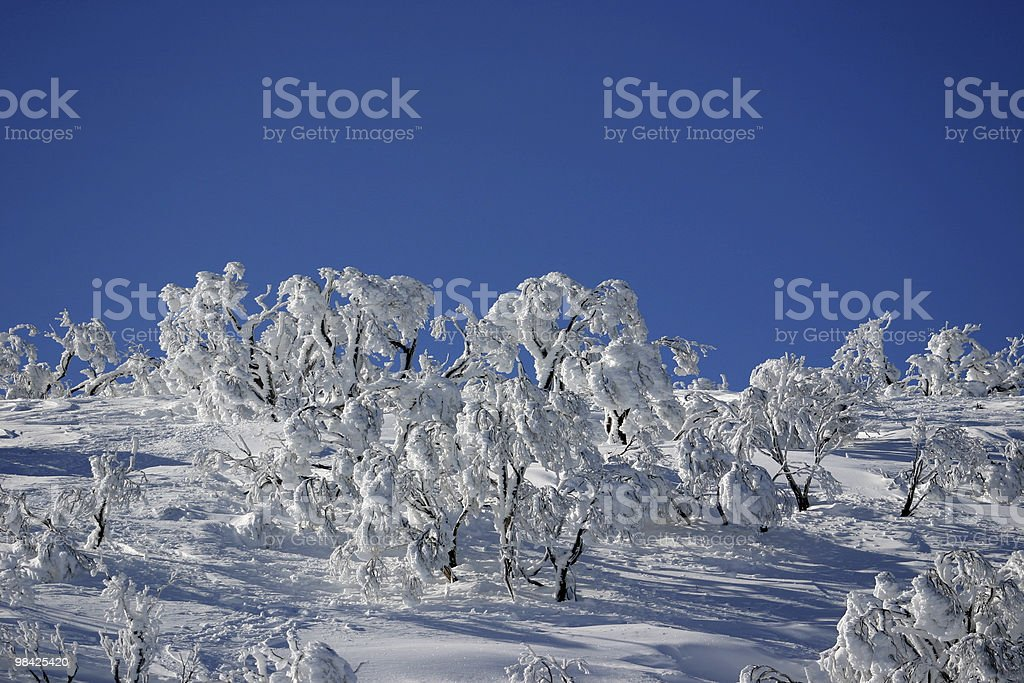 White Trees with Blue Sky royalty-free stock photo