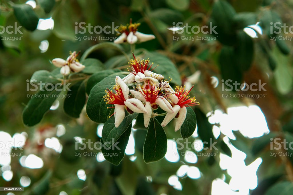 White tropical flowers on a tree stock photo