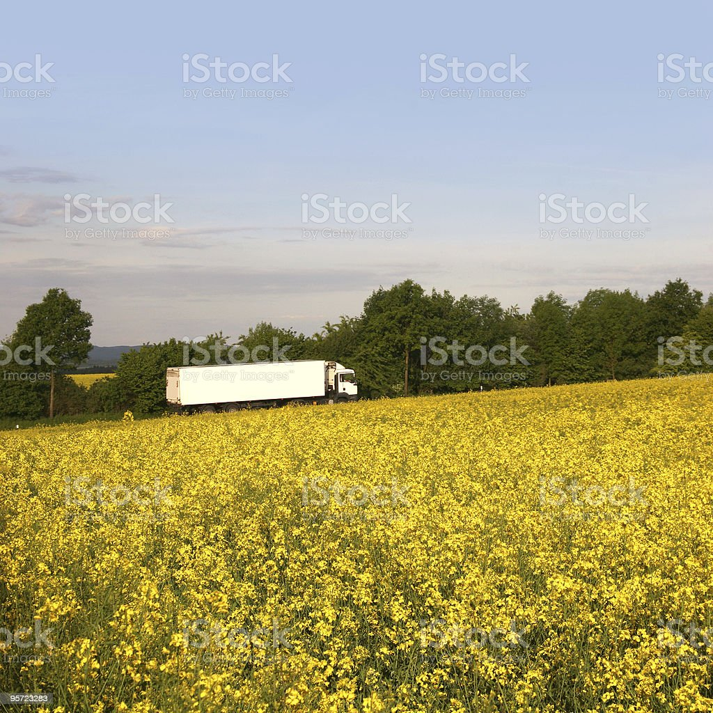 White truck behind a bright rape field royalty-free stock photo