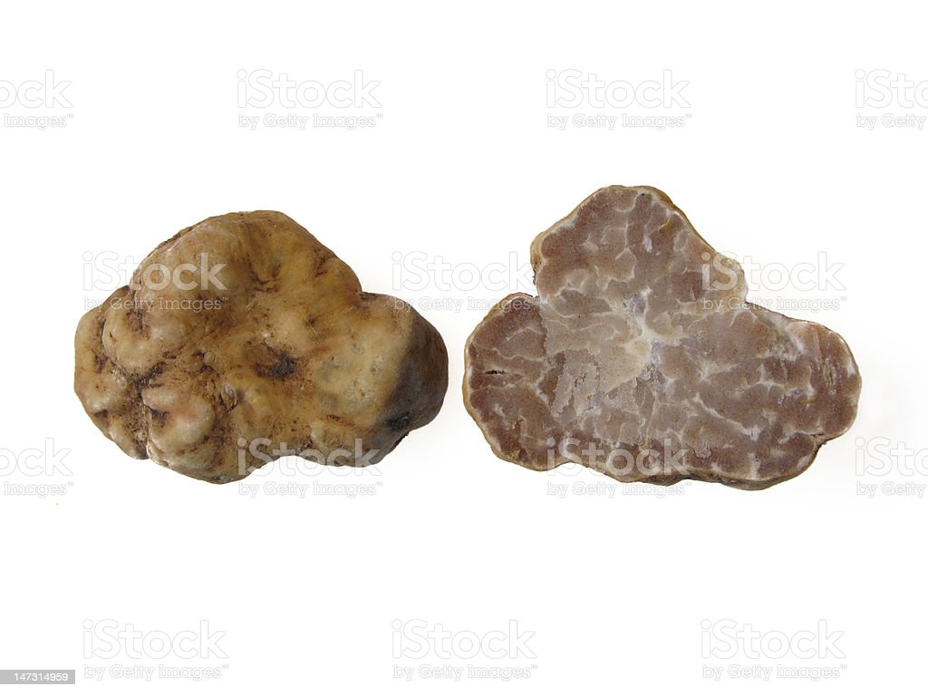 white truffle stock photo