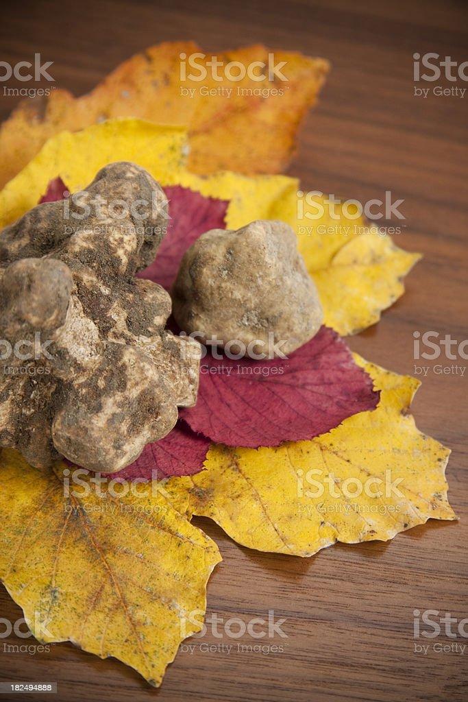 White truffles stok fotoğrafı