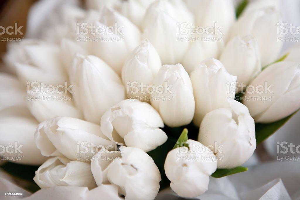 White Tulip Bouquet Detail stock photo