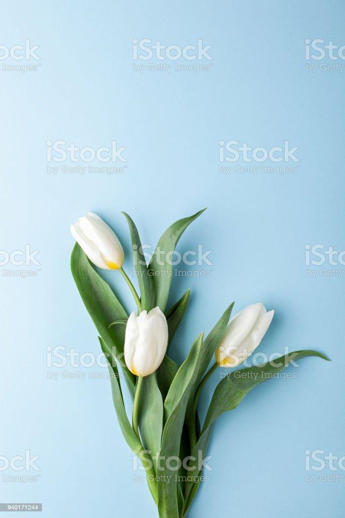 Bouquet De Fleurs Tulipe Blanche Sur Fond Bleu Photos Et Plus D
