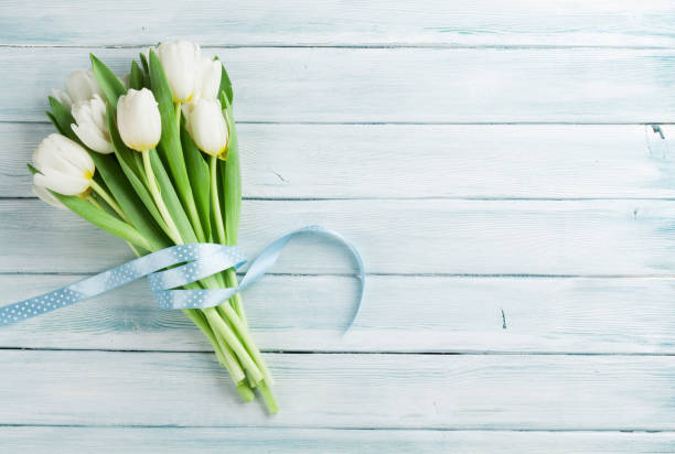 vita tulpaner bukett - flower bouquet blue and white bildbanksfoton och bilder