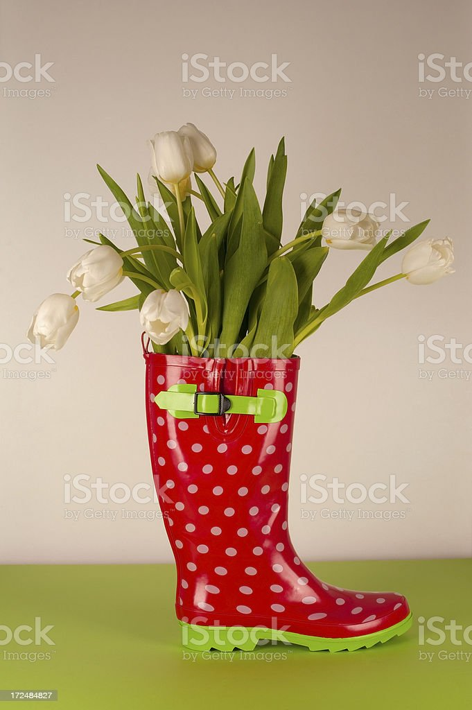 White Tulips in Rubber Boot royalty-free stock photo