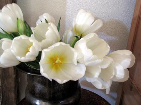Witte Tulpen In Zilver Kom Stilleven Stockfoto en meer beelden van Bloem - Plant
