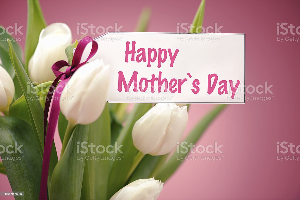 White tulips on pink with mothers day card royalty-free stock photo