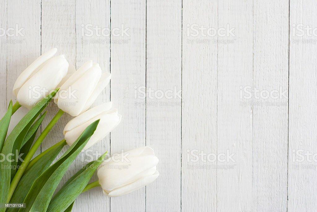 White tulips on white wood background stock photo