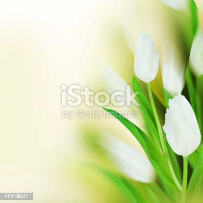 istock White tulips with artistic blur. 474196411