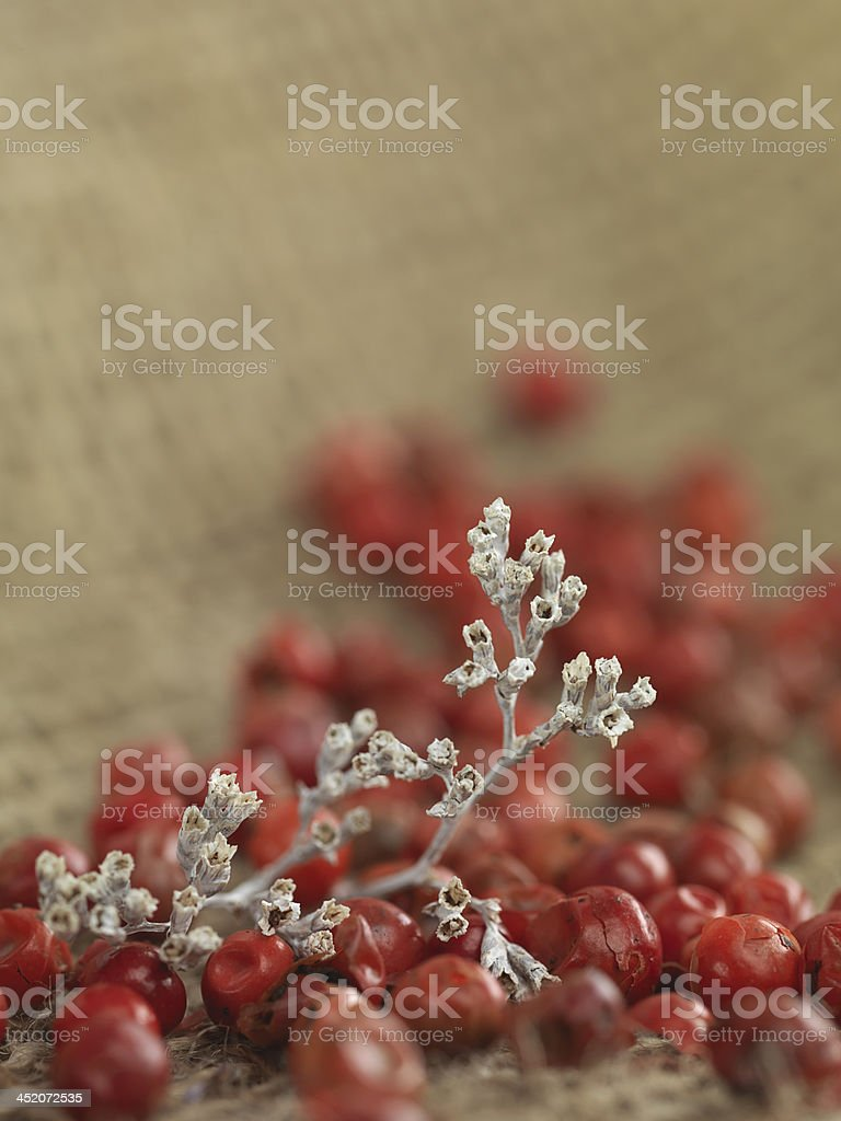 white twig red pepper royalty-free stock photo