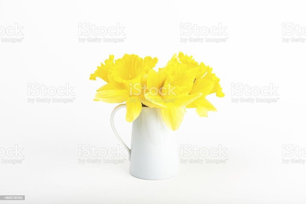 White vase of daffodils on white background stock photo