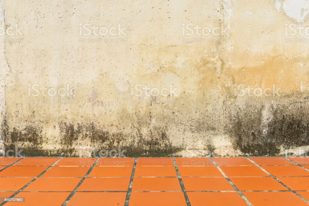 White wall and Mildewed walls stock photo
