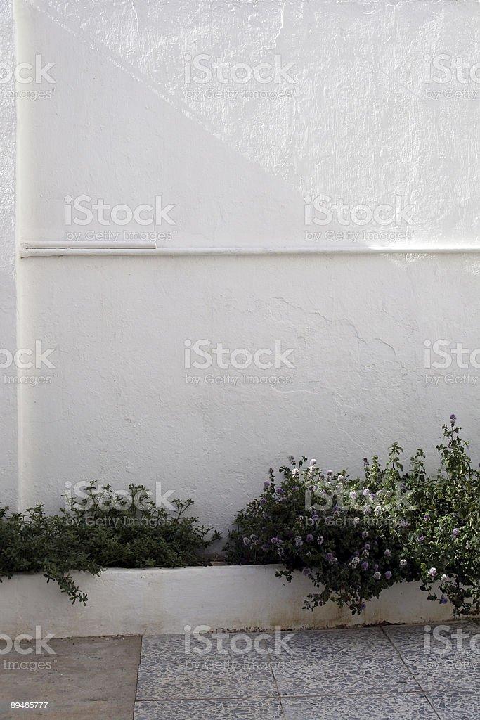 Mur blanc avec des plantes photo libre de droits