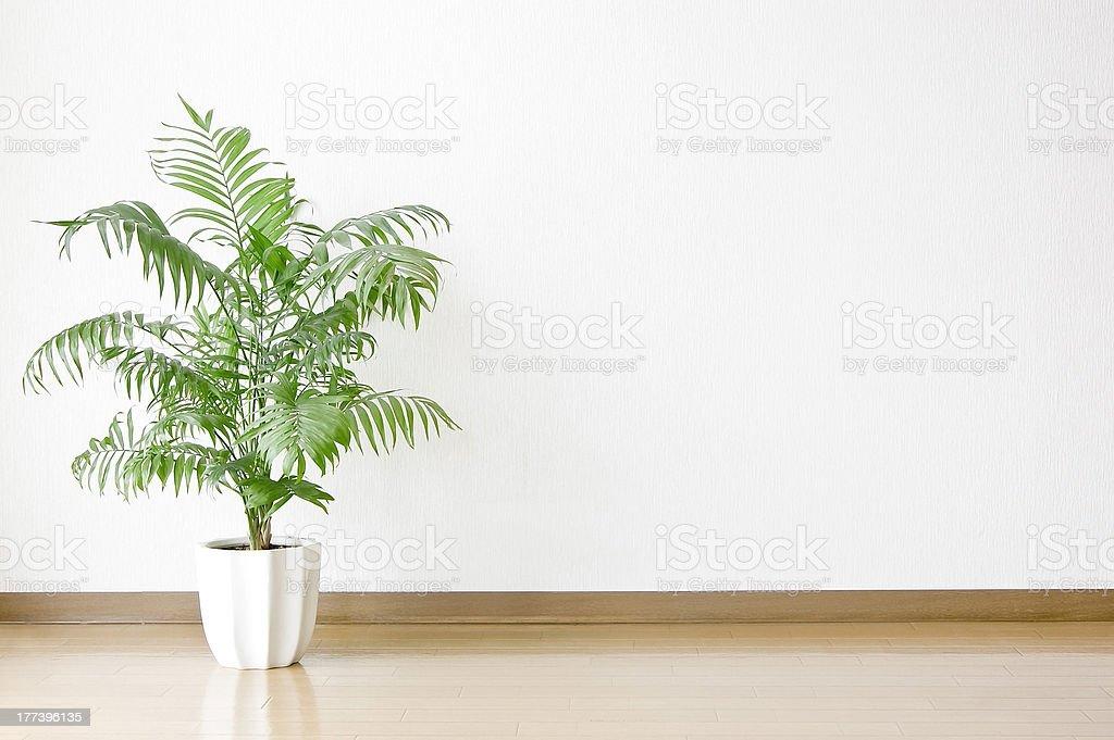 White walls with foliage plant. stock photo