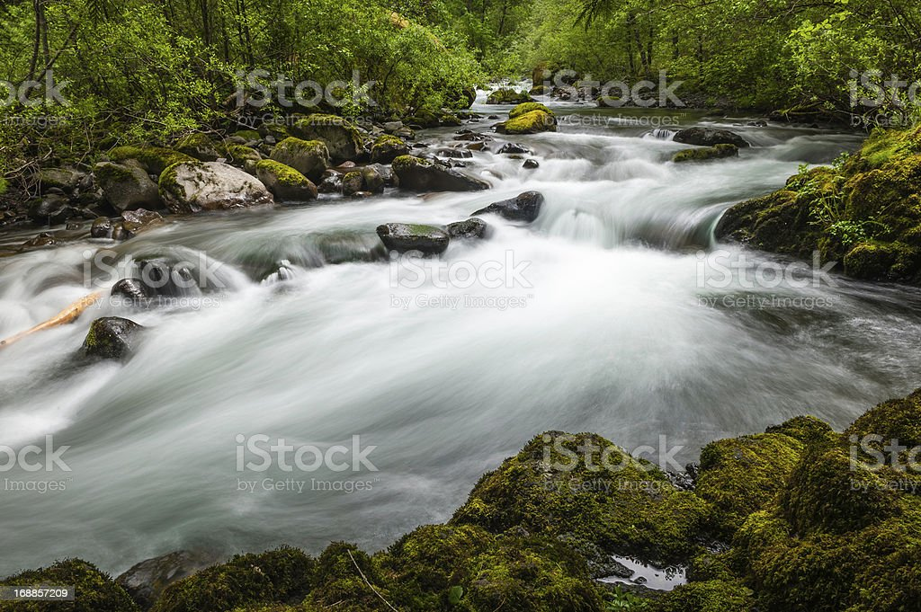 White water river rushing through green forest wilderness stock photo