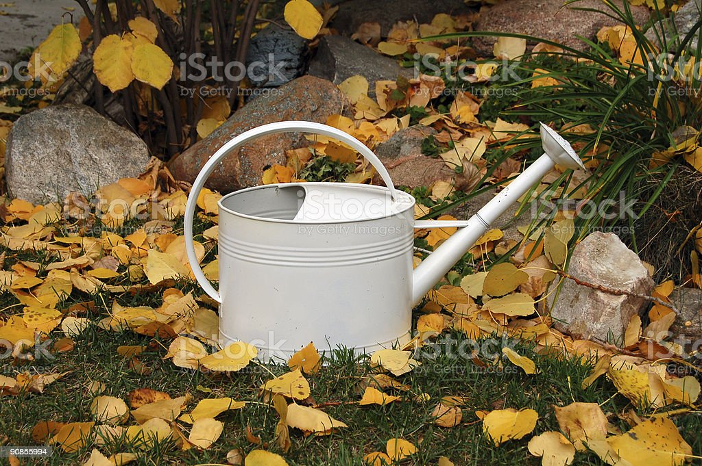 White Watering Can and Autumn Leaves royalty-free stock photo