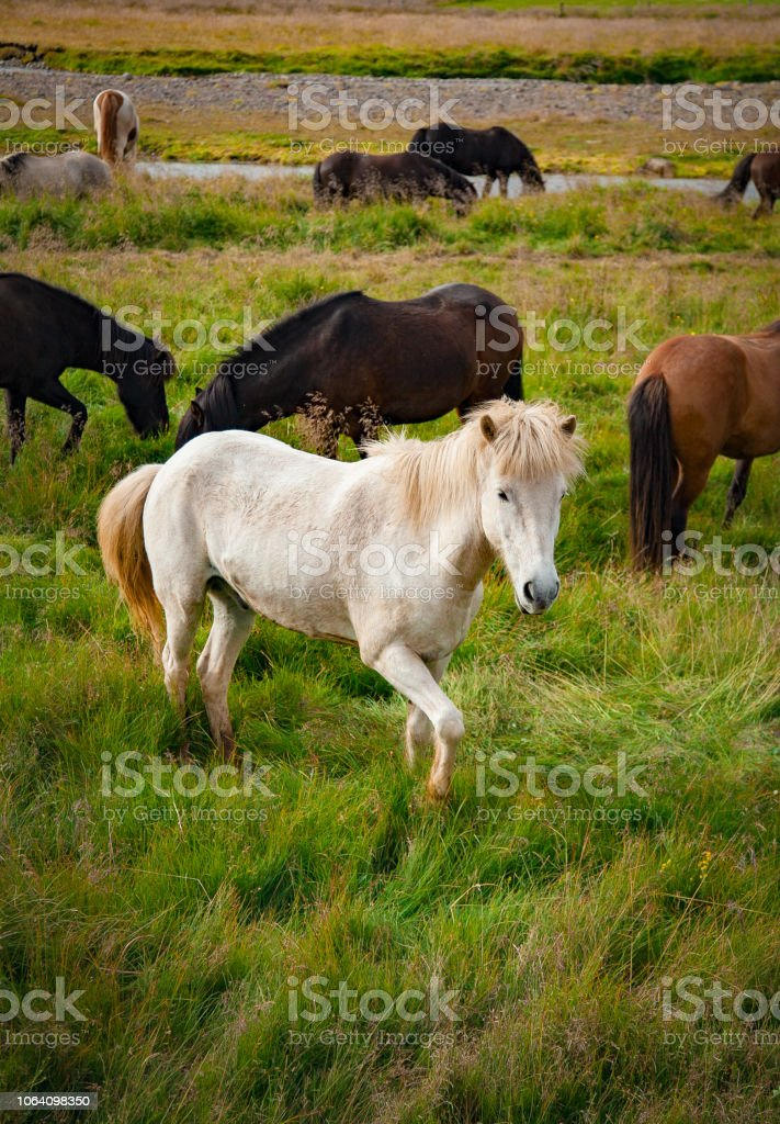 White Wild Horse In A Peaceful Meadow Stock Photo Download Image Now Istock
