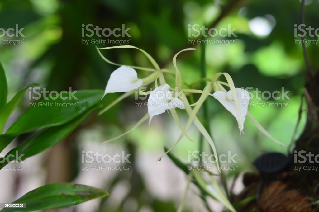 White wild orchid stock photo
