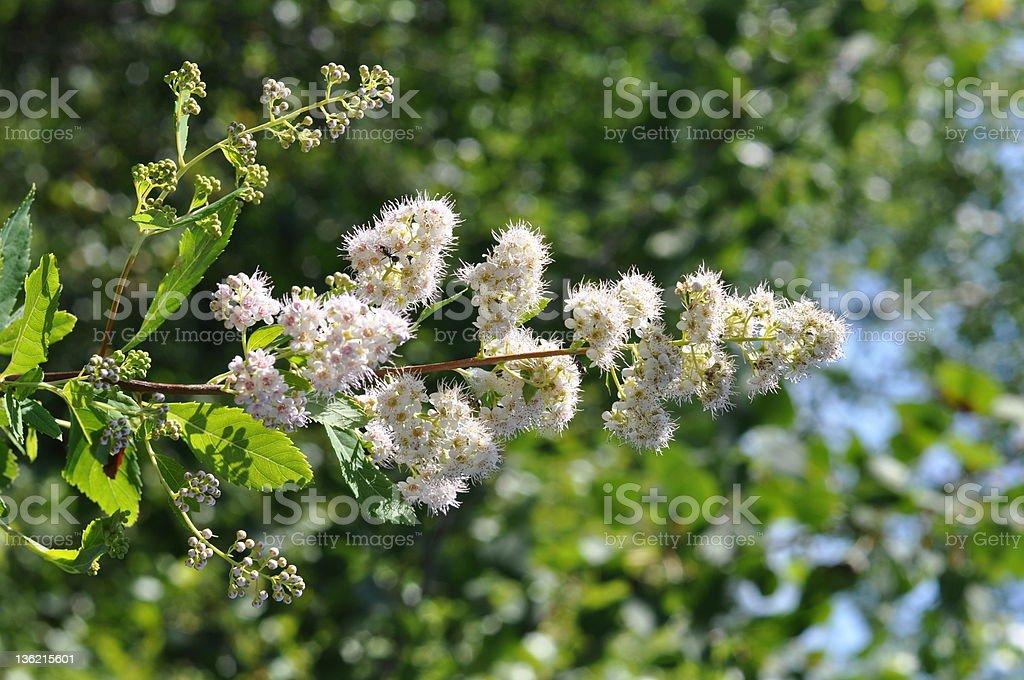 Weiß Wildblumen – Foto