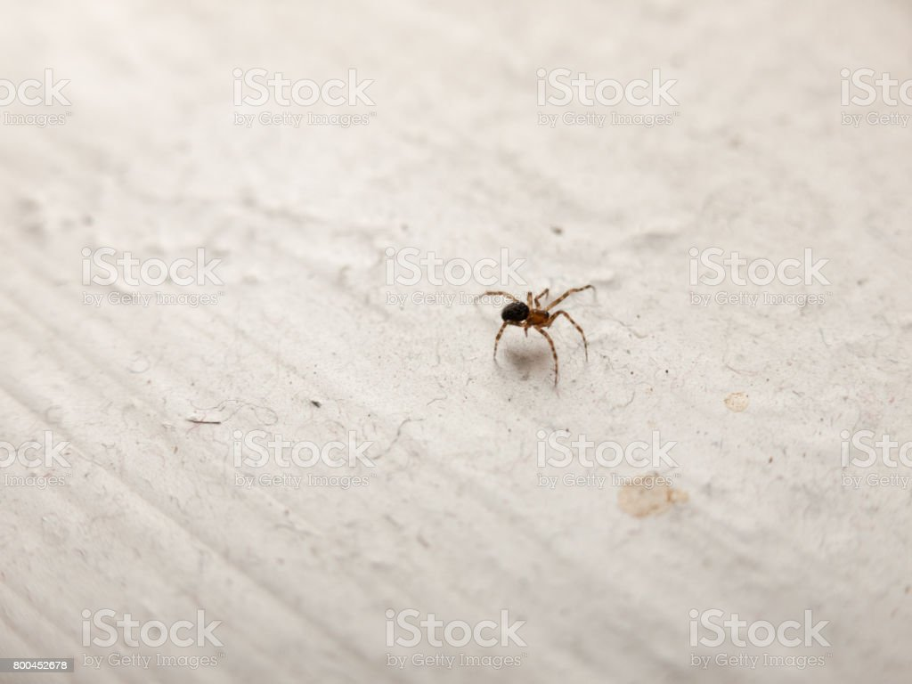 white window ledge spider in house stock photo
