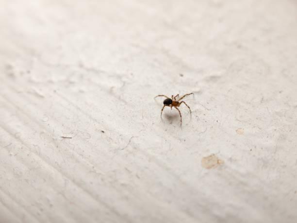 araignée de rebord de fenêtre blanche dans la maison - araignée photos et images de collection
